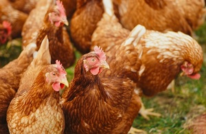 An outbreak of Avian influenza has been confirmed among laying chickens at a farm near Redcar.